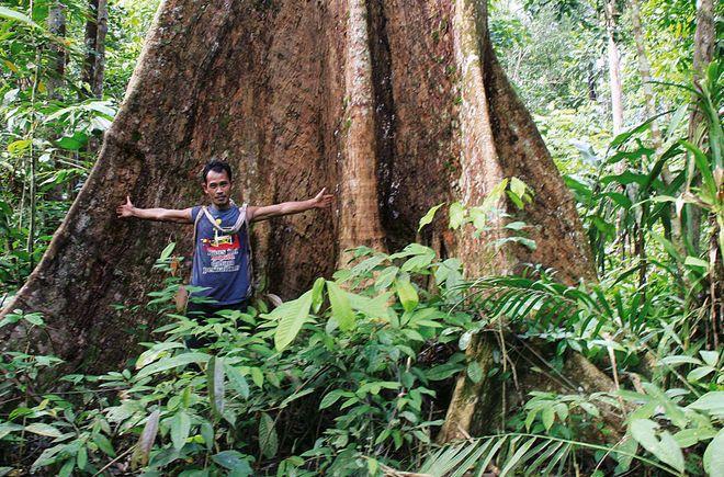 Hutan hujan kami jangan sampai jadi kayu lapis!https://www.hutanhujan.org/