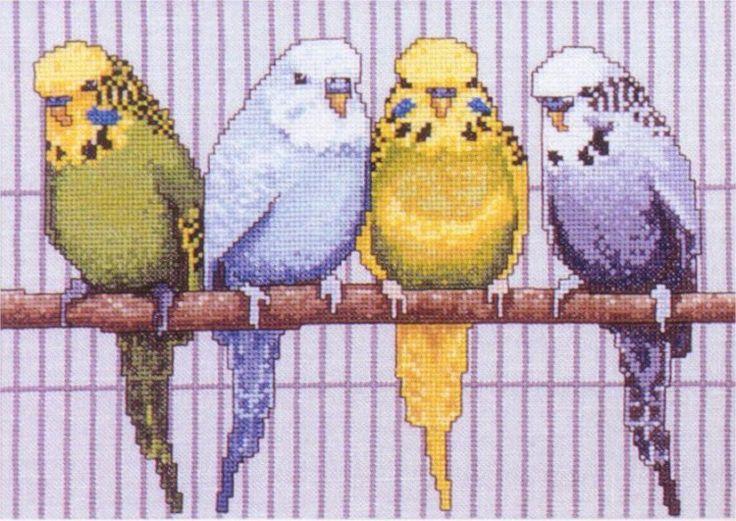 Borduurpatroon Kruissteek Papegaai - Parkiet *Embroidery Cross Stitch Pattern Parrot ~1/3~