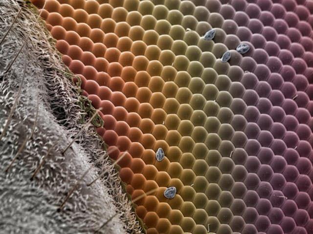 あなた誰 電子顕微鏡で撮った不思議な生物の肖像 電子顕微鏡
