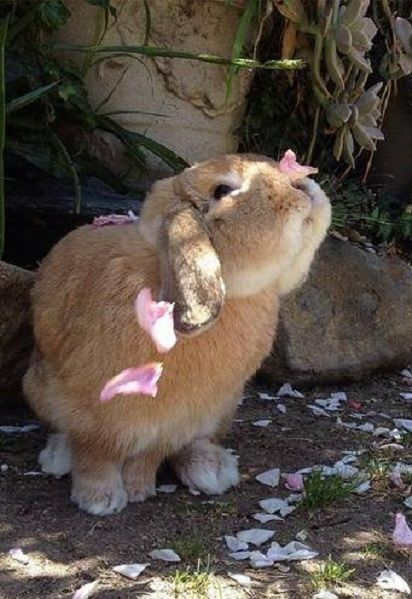 A bunny playing with petals