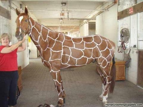 Halloween horse costume perfect for chestnuts or red duns