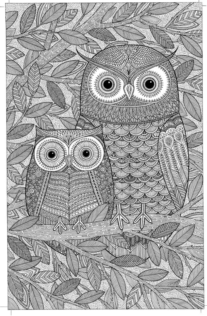 Owls Adult Colouring By James Newman Gray Owl Coloring