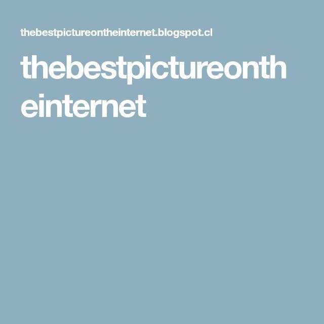 thebestpictureontheinternet