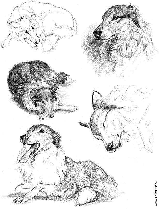 наброски животных - Поиск в Google