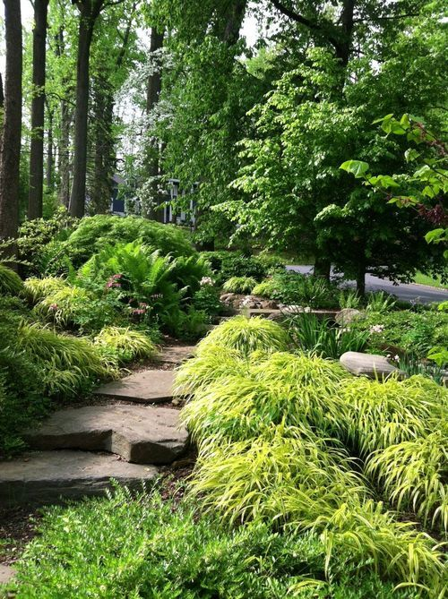 Hillside garden with japanese forest grass designed and for Japanese planting ideas
