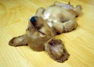 soooo tired....and so adorable.