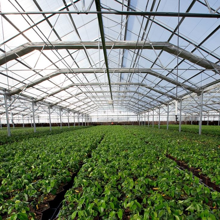 Commercial Light Deprivation Greenhouse - Commercial Greenhouses