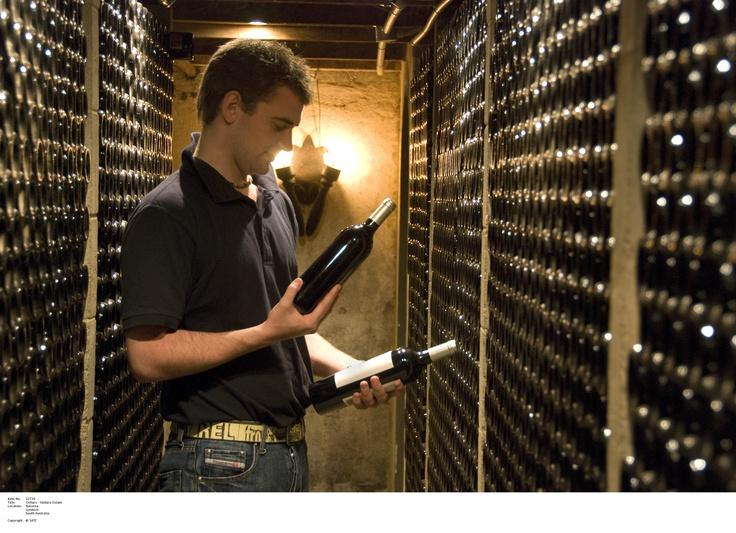 In the Cellars of Yaldara Estate.  Image Source: SA Tourism Commission.