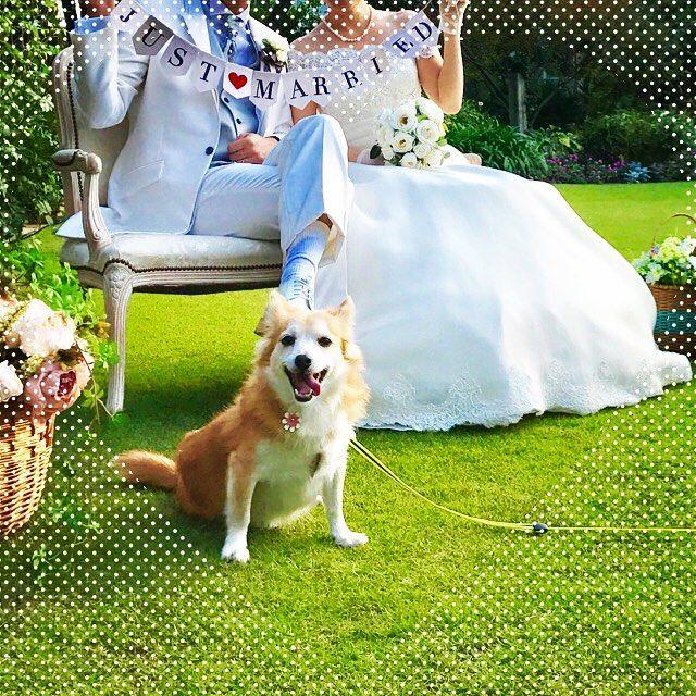 今日の撮影はお嫁さんの愛犬「ビビちゃん」も参加♡ 挙式はまだ春なのでビビちゃんだけ先に顔出しOK頂きました 笑  天気もよかったしっ楽しくお仕事させてもらっちゃいました(о´∀`о)  @kayutei  #前撮り #撮影#結婚式前撮り #花嫁#プレ花嫁 #ウエディングドレス #愛犬#わんこ #いぬ好き #豊田市美容師 #豊田市美容院 #豊田市美容室 #豊田市ヘアセット #豊田市シナジー #ヘアスタイリスト #ブライダル #花遊庭 #photo #dog #wedding #garden #kayutei #hairstylist #justmaried