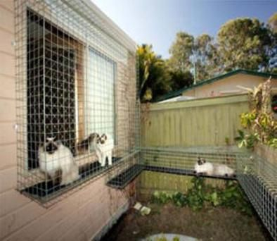 19 Best Catio Images On Pinterest Cats Cat Stuff And