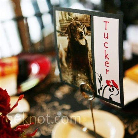 Picture of pups/table names that have been helped with wedding favor donation to CT animal shelter