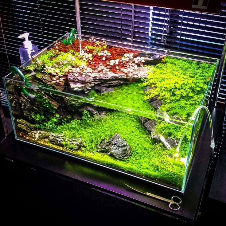 1650 Best Images About Aquascaping On Pinterest