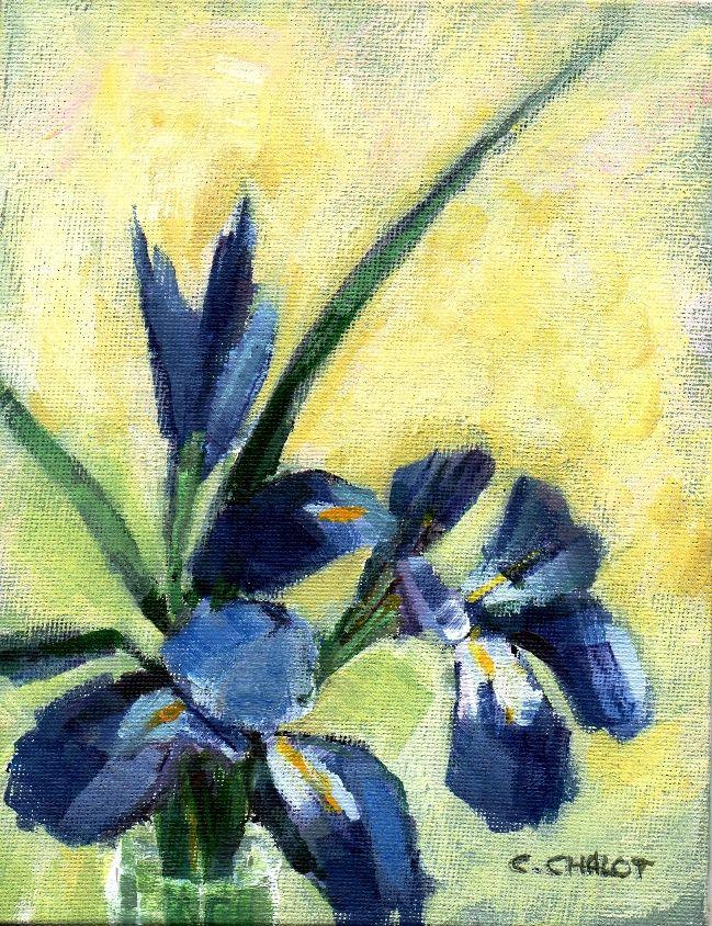 petits iris