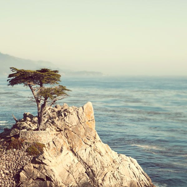 Irene Suchocki. California: Lonely Cypress, Summer Nature Photography, California Dream, 17 Miles, Fine Art Photography, Trees Photographers, Cypress Trees, Summer Photography, Photography Blog