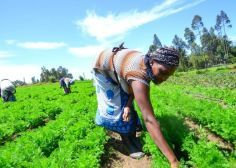 Is Climate Smart Agriculture Profitable for the Developing World?