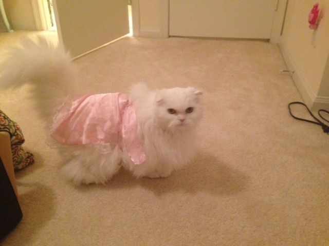 Princess Penelope looking fabulous in her French Maid outfit.