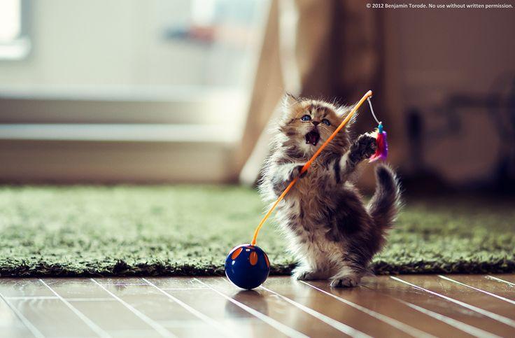 Kitten Means Business by Ben Torode, via 500px
