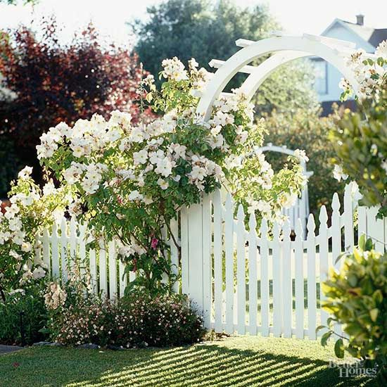 Landscaping with white roses will create a front yard or backyard that's full of beauty. You'll want to spend more time outside enjoying nature when you have a stunning landscape. Let these dazzling photos serve as your garden inspiration.