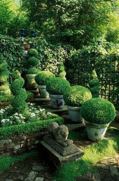 Potted boxwood gives more dimension to your garden.