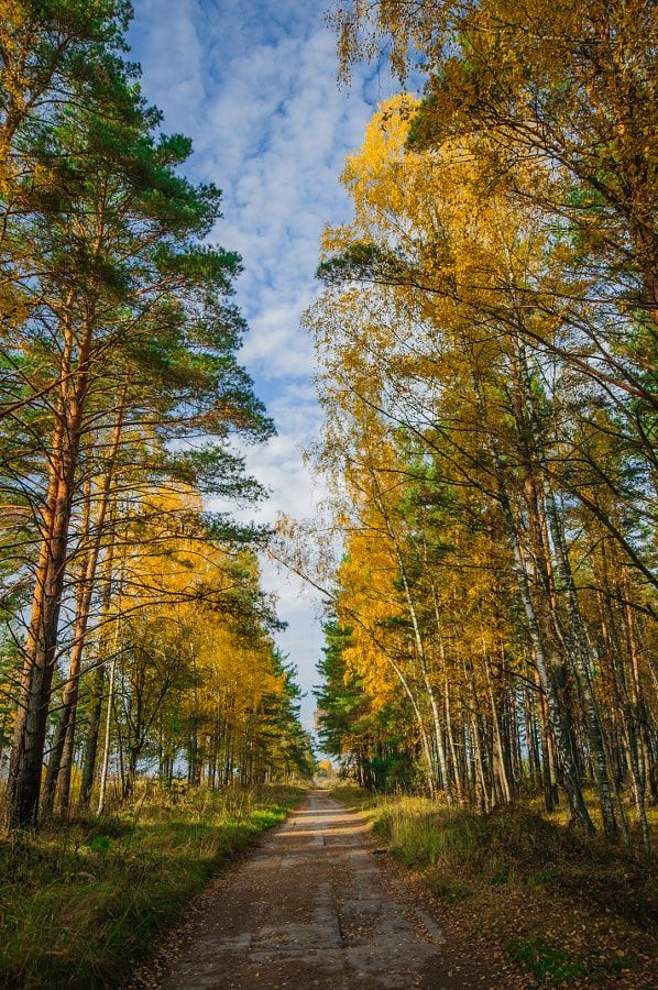 Road in the fall forest (Russia) by Sergey Grishin / 500px