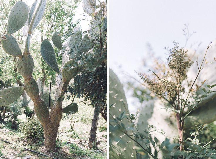 plants in Crete