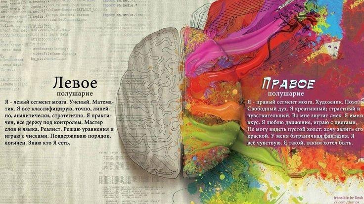 Иммунная система и успешность человека синхронизированы с балансом полушарий головного мозга