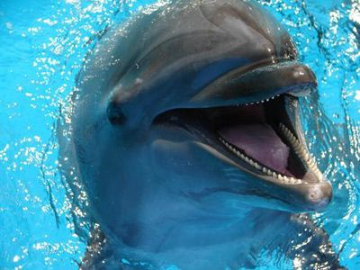 Swimming with dolphins: only a bucket list item for like every single Delta.