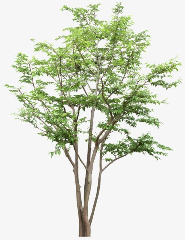 Tree Png Tree Tree Clipart Tree Clipart Trees Tree Clipart Tree Png