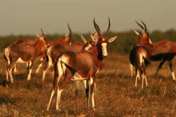Lalibela Game Reserve and Safari Lodge, Addo Elephant Park, Eastern Cape, South…
