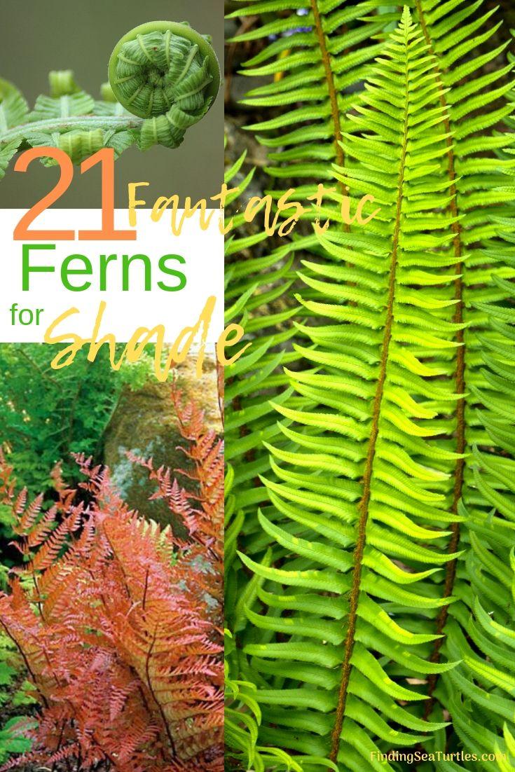 21 Best Ferns For Your Garden Ferns Garden Shade Garden Succulents Garden