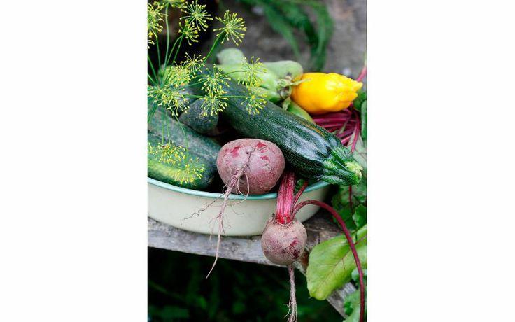 """Odla ekologiska grönsaker och kryddor själv – från första fröet. """"Serie Organic"""", 25 kr/påse, Nelson Garden."""