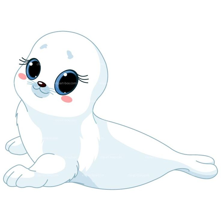 CLIPART WHITE BABY SEAL | Royalty free vector design