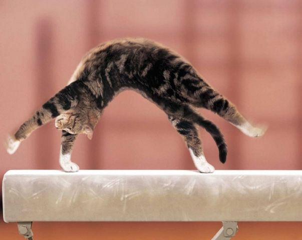 Gymnastique... Même les chats font de la gym ! LOL