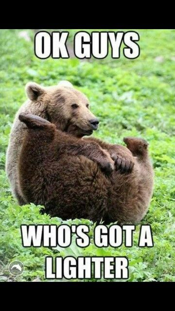 Grizzly Bear meme   LOL.Animals   Funny animals, Funny ...