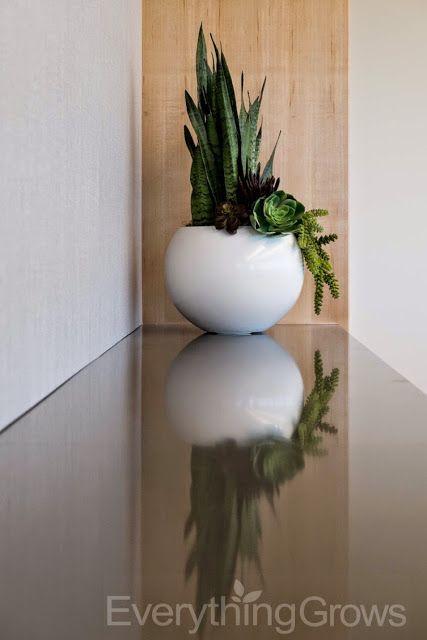Beautiful New Indoor Plant Installation