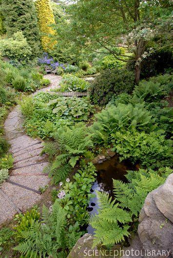 Garden path, Bide-A-Wee Cottage Garden, Northumberland, UK / curved pathway / ferns / bridge /