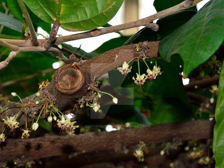 Flowers from Tree Trunk by All-Natural-Spirit.deviantart.com on @DeviantArt