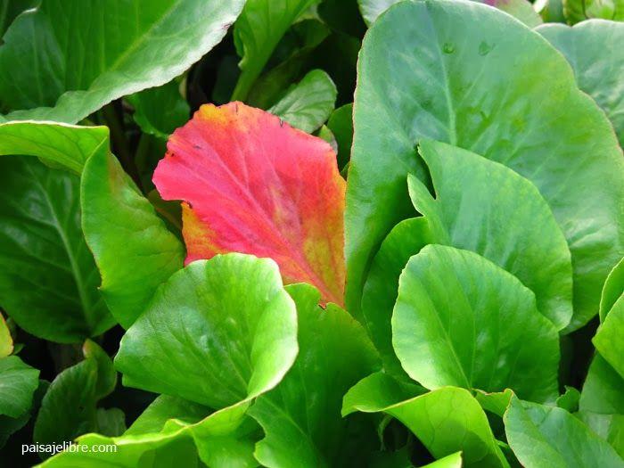 Las 25 mejores ideas sobre plantas de invierno en pinterest bayas rojas bordes de parterres - Plantas de invierno ...
