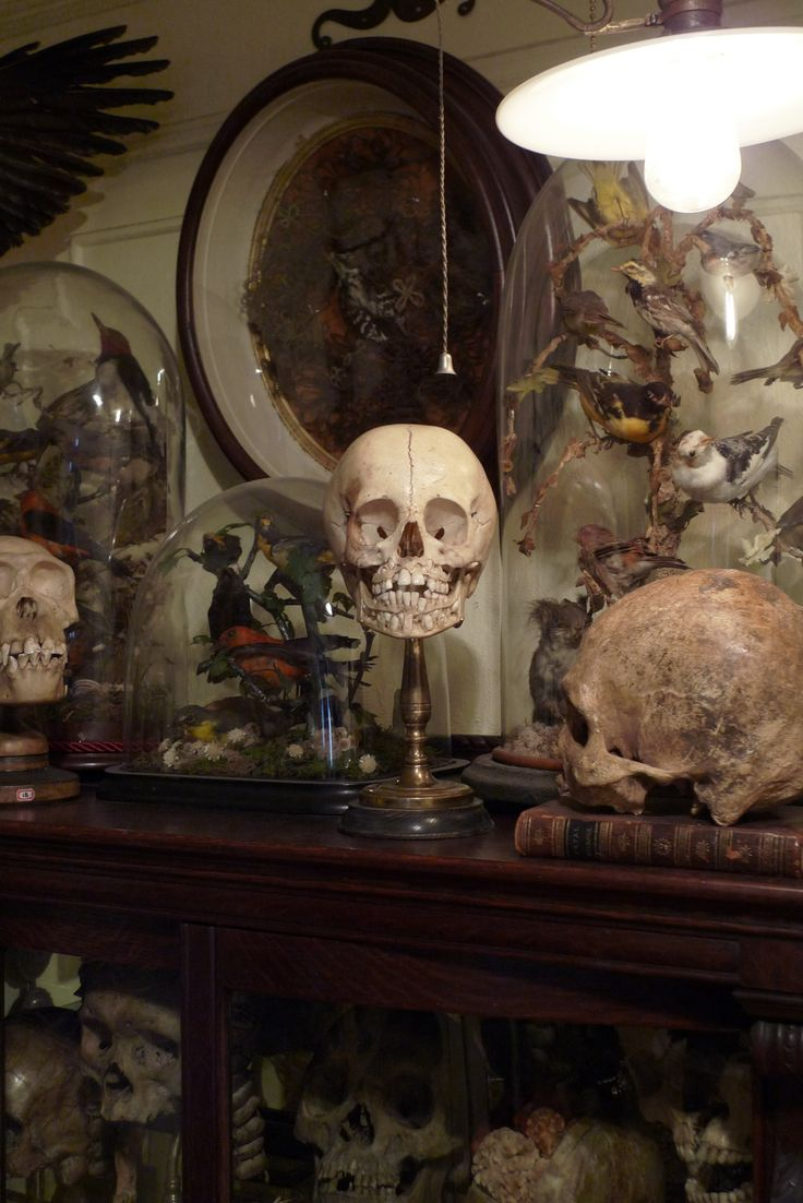 Decor, Skull, Display Cabinets, Bones, The Belle Jars, Ryan Matthew, Cabinets Of Curiosity, Apothecaries Jars, Halloween Ideas