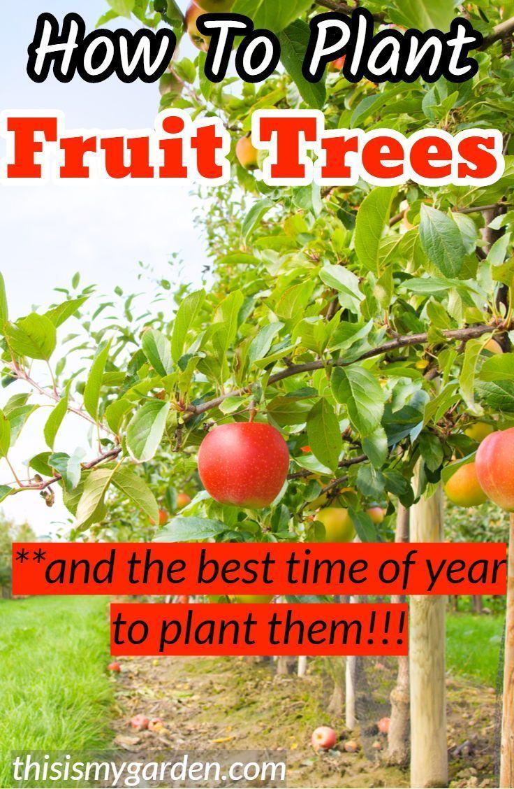 Wie Zu Pflanzen Obstbaume Und Die Beste Zeit Des Jahres Sie Zu Pflanzen Fruit Trees Dwarf Fruit Trees Fruit Trees Planting Fruit Trees