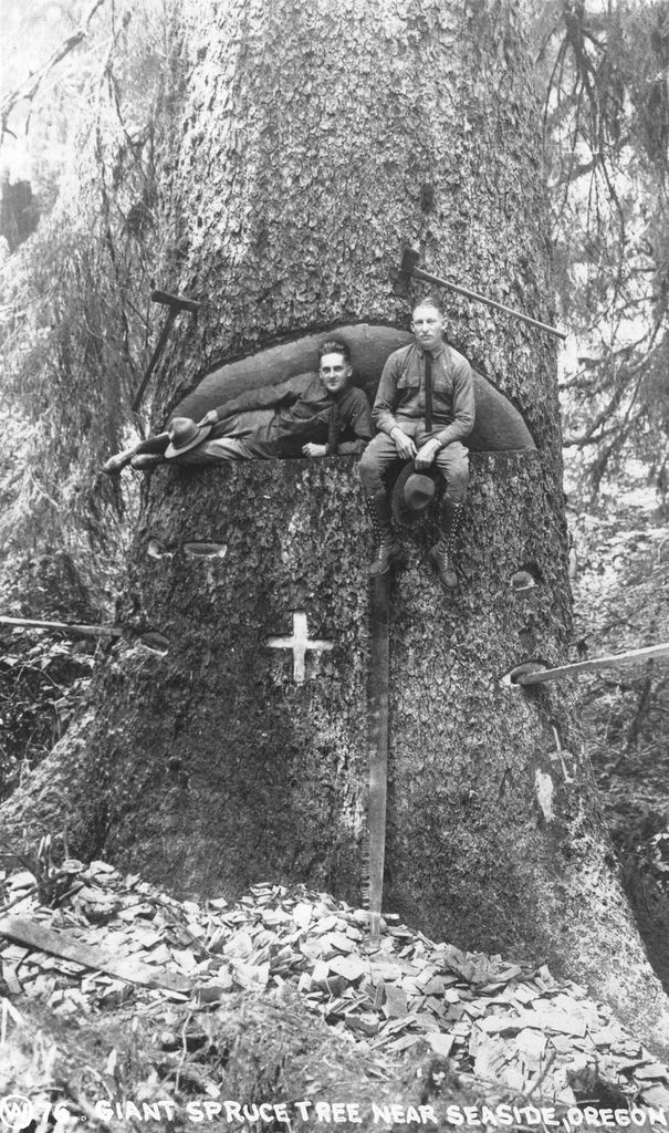 Men sitting in giant spruce tree near Seaside, Oregon by OSU Special Collections & Archives, via Flickr