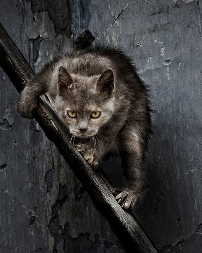 Фотографии уличных и дворовых котов, они как в жизни — бесстрашные и дерзкие!   Дни.Жизнь.Суть