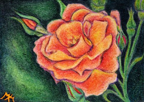 #ACEO Original Colored Pencil ORANGE #ROSE #Flower #Floral #Garden Bud Plant #EBSQ SFA #Miniature
