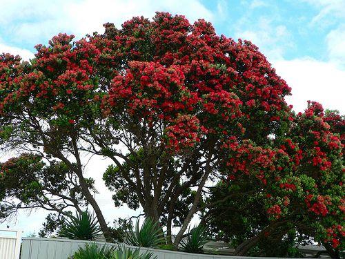 Takapuna Beach, North Shore City, Auckland, New Zealand By Sandy Austin, Via