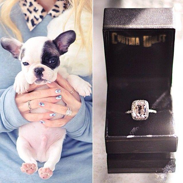Wedding Dream @weddingdream | Propose with a puppy Oh my Gosh it's A Frenchie! Aka French Bulldog