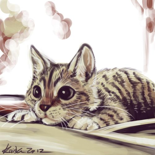 291 best Drawing cats images on Pinterest | Kitty cats ... Tabby Cat Cartoon Drawing