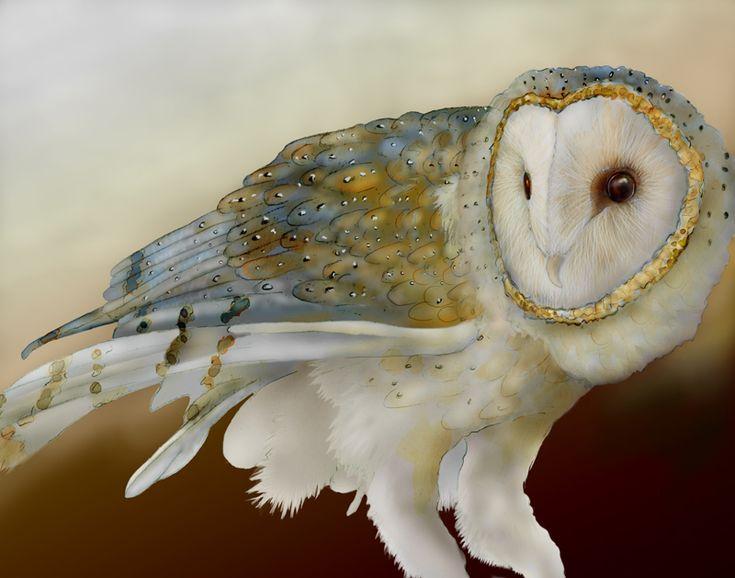 barn owl ~ art by Jeannine Chappell