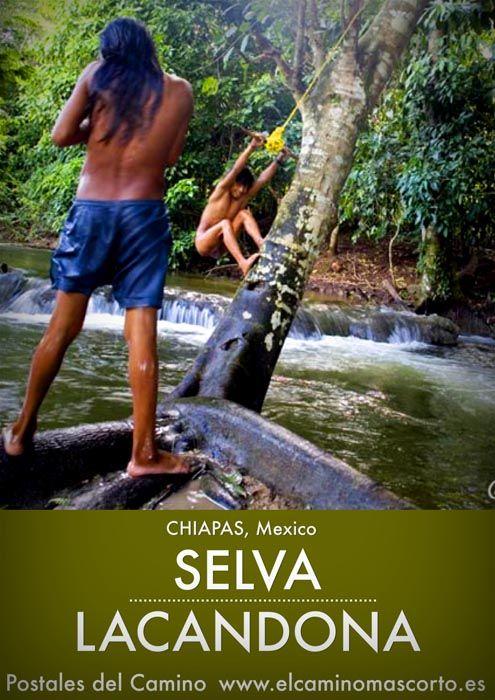 La Selva Lacandona se encuentra en el estado de Chiapas, parte de ella pertenece a la Reserva de la Biosfera de Montes Azules, la región de mayor biodiversidad de México y dicen que una de las más bellas. Leer más: http://www.elcaminomascorto.es/selva-lacandona-senderismo-lacanja-chansayab-dormir/