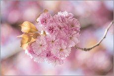 Japanische Kirschblüte in LOVE 5