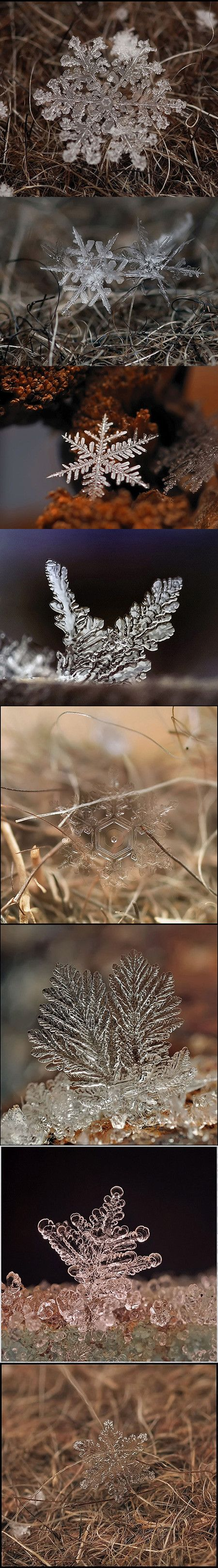 Andrew Osokin is a Russian photographer based in Moscow. Using a 60/90mm macro lens and his Nikon D90, he captured these amazing snowflake images.